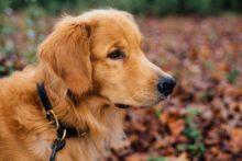 online hundetraining erfahrung