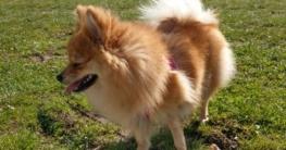 olivenoel hund