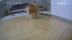 Hund furbo