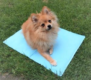 hund selbstkuehlende matte