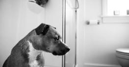 hundeklo hundetoilette