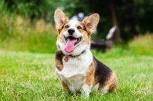 zahnstein beim hund entfernen